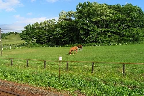 ホーム向かいに競走馬