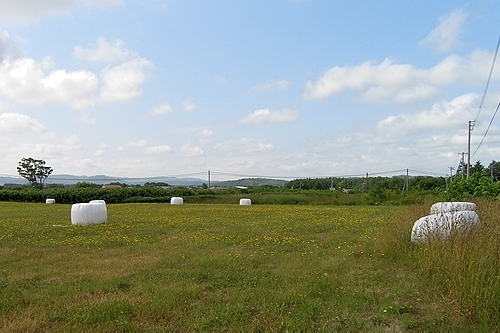 駅裏の牧草地