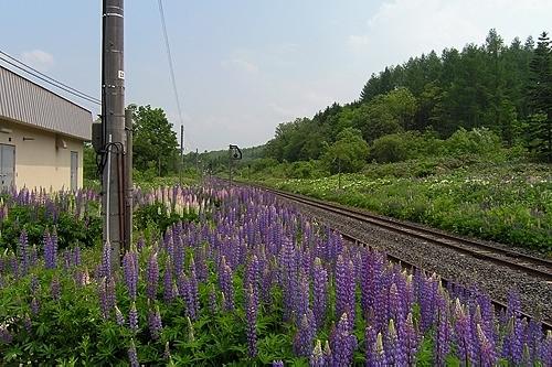 奥白滝駅ホーム跡